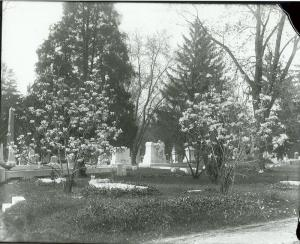 Image of Ashland Cemetery with the Lindner monument at the center of the photo. Magnolia (tulip magnolia) trees are in bloom at the front of the photo.